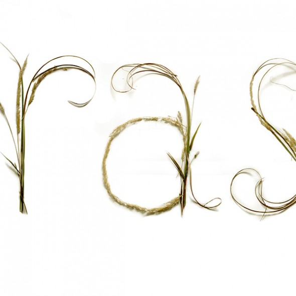 headers_0020_grass